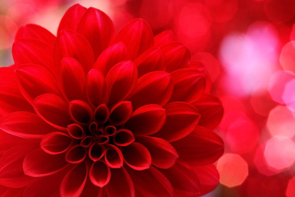 8de4eb437e2 Wat is de psychologische betekenis van de kleur rood? - Inspirerend ...