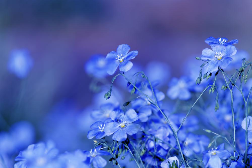 kleurbetekenis blauw